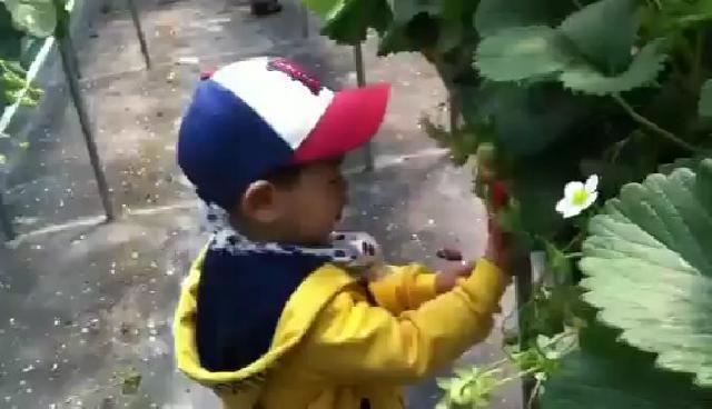 유치원 꼬마 딸기농장에 가다