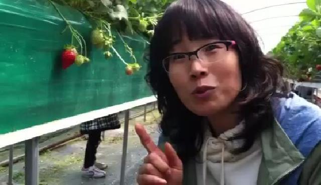 왜 딸기체험농장 왜 인기가 많을까요?