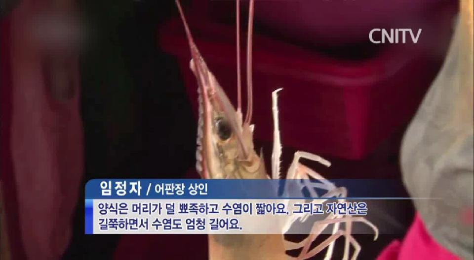 [CNI TV] 홍성남당리 대하축제