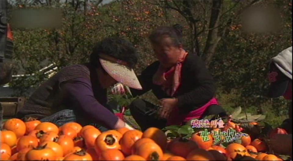 [CNI TV]햇빛촌 마을 감 잡았스