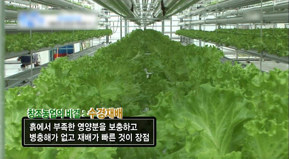 창조농업의 꿈, 식물공장 공장장 류희용씨