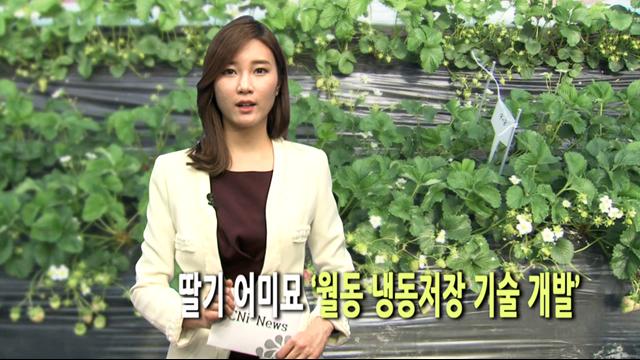 딸기 어미묘 '월동 냉동저장 기술 개발'