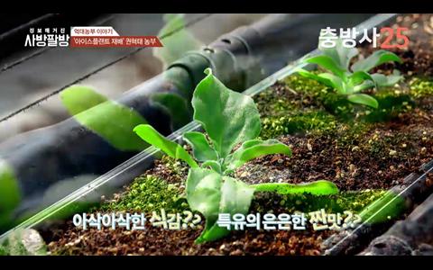 충남 최초 아이스플랜트 재배 성공한 농부 권혁태씨 이야기