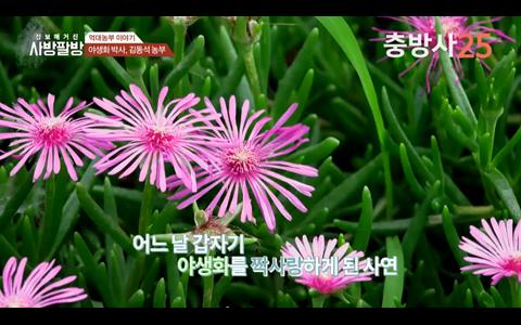 당진의 야생화 박사 김동석씨