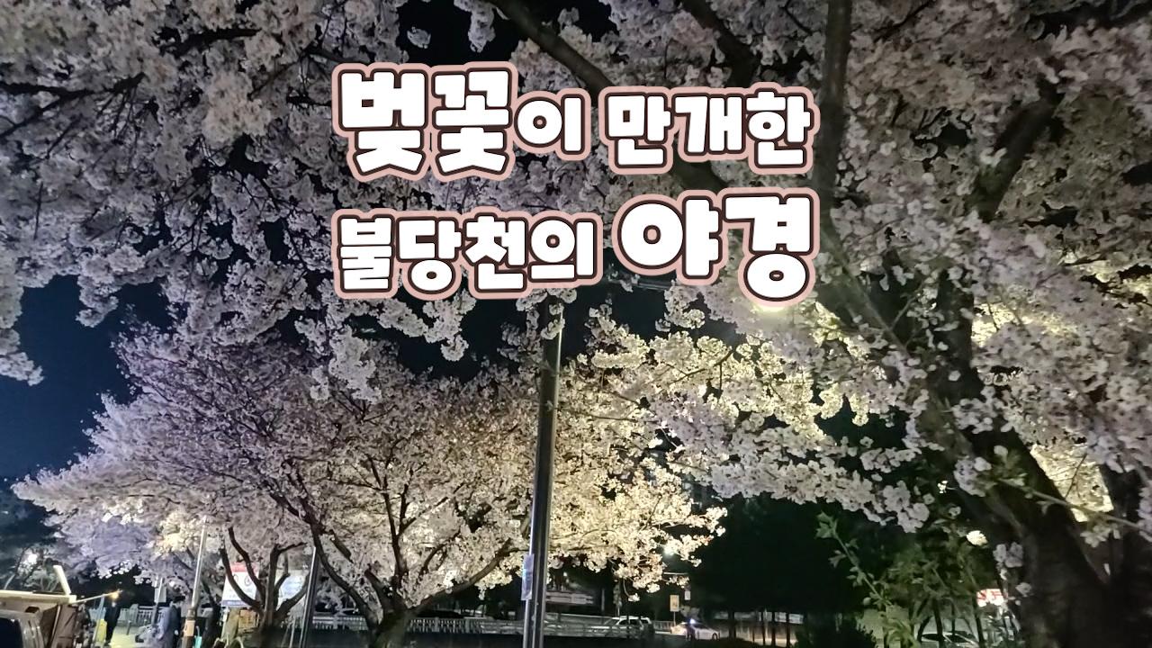 벚꽃이 만개한 불당천 야경