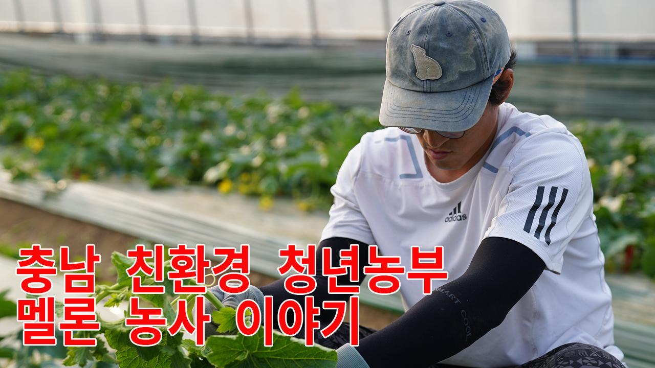 충남 친환경 청년농부 멜론 농사 이야기