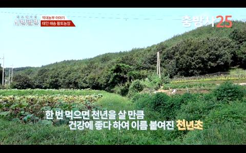 충남 태안 해송 천년초-김명복씨