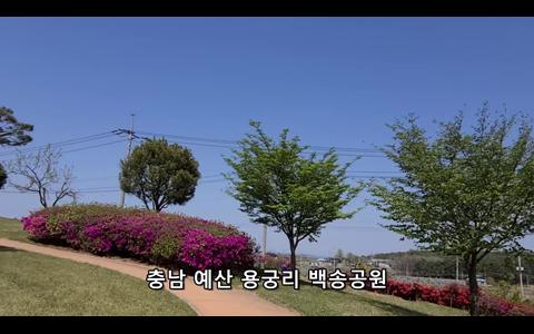 예산 용궁리 백송공원