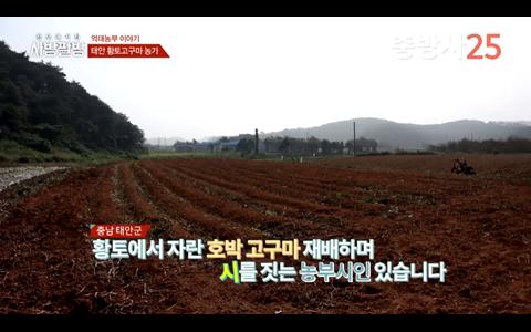 농업의 성공모델 농업인의 성공비법, 태안 호박고구마 이용복씨