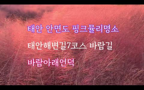 핑크뮬리와 함께하는 일출, 태안해변길 7코스 바람아래언덕