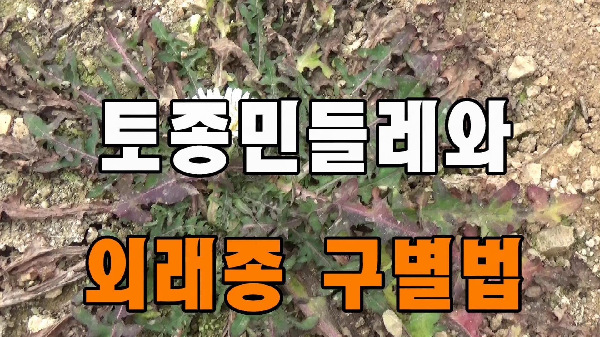 토종 민들레와 외래종 민들레의 구별법
