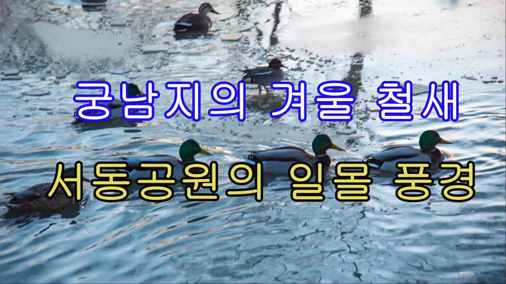궁남지의 겨울 철새