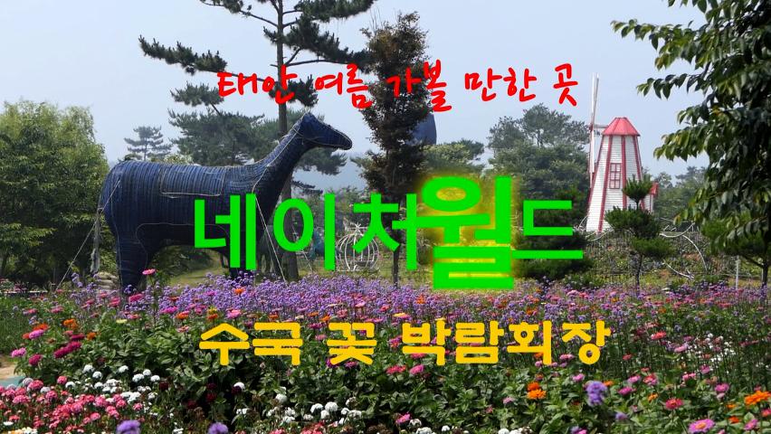 태안 여름 가볼 만한 곳, 네이처월드 수국 꽃 박람회장