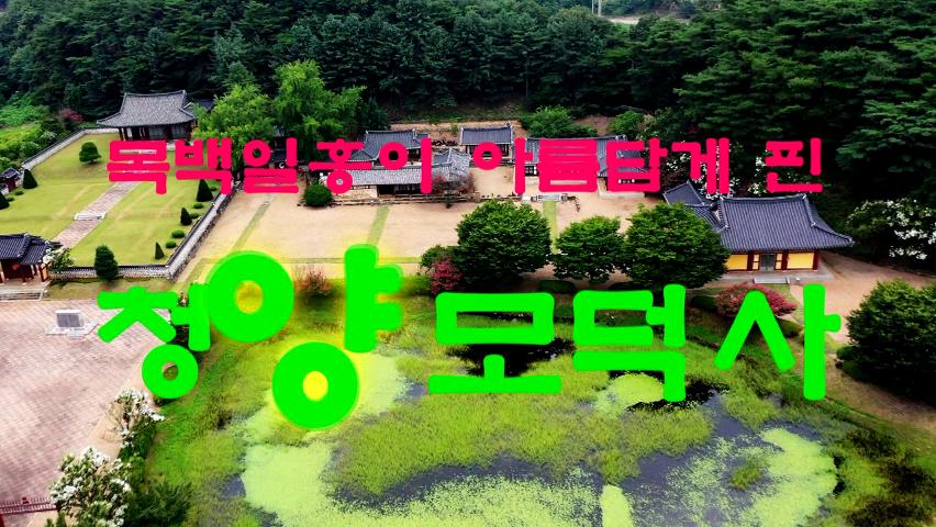 목백일홍이 아름답게 핀 청양 제10경 모덕사