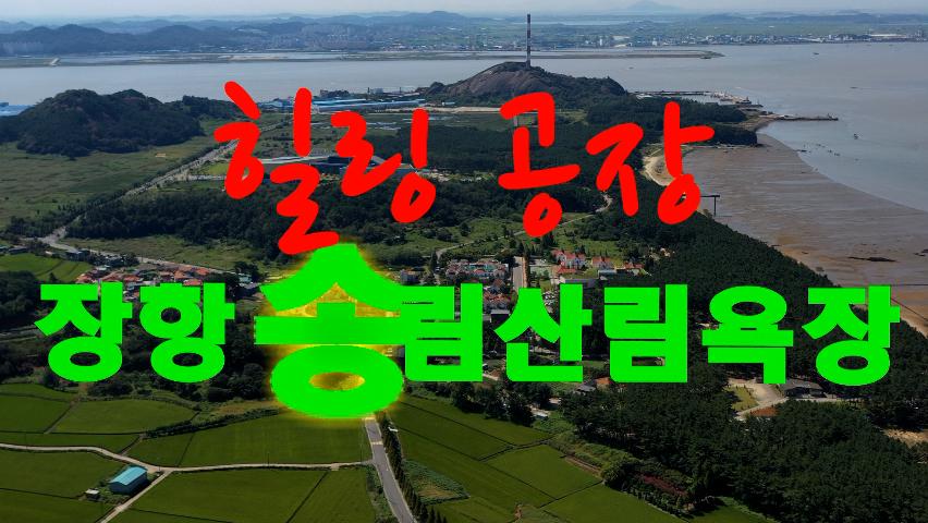 힐링 공장, 장항 송림산림욕장