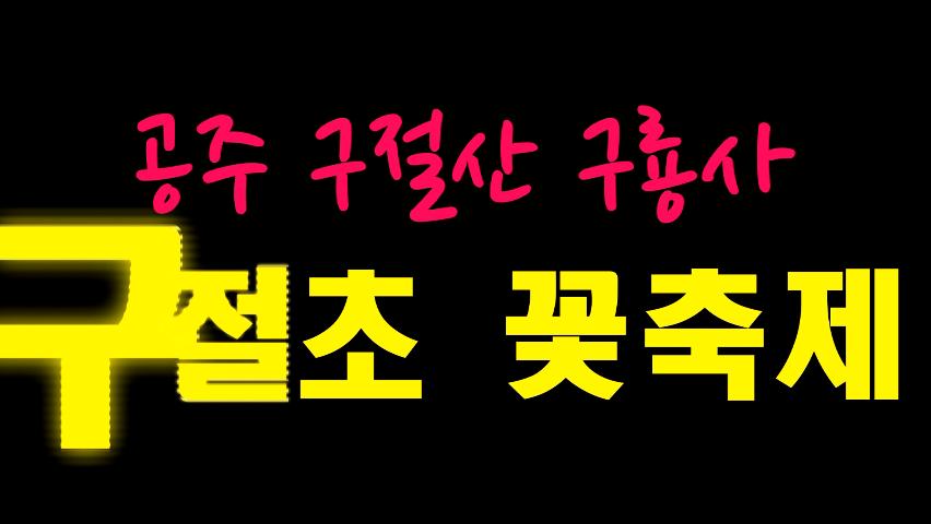 공주 구절산 구룡사 구절초 꽃축제